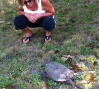 Snapping Turtle and human