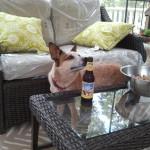 Beer Sniffing Dog